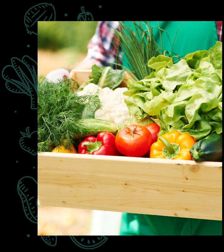 frutas y verduras orgánicas